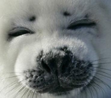 viaggi canada foche madeleine