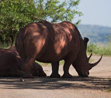 safari in africa, big five