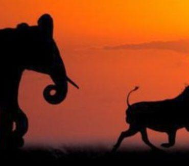 Safari e viaggi avventura in Zambia