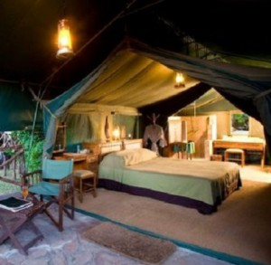sud africa safari in lodge