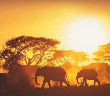 tanzania safari sud africa