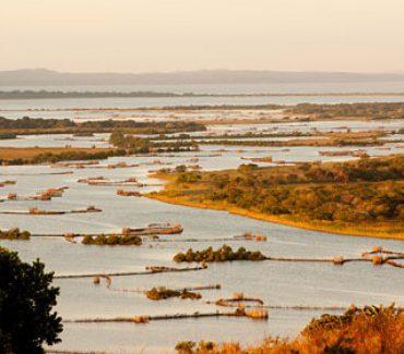 safari in sud africa